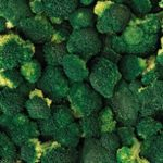 Brocolli-Oerlemans-Foods